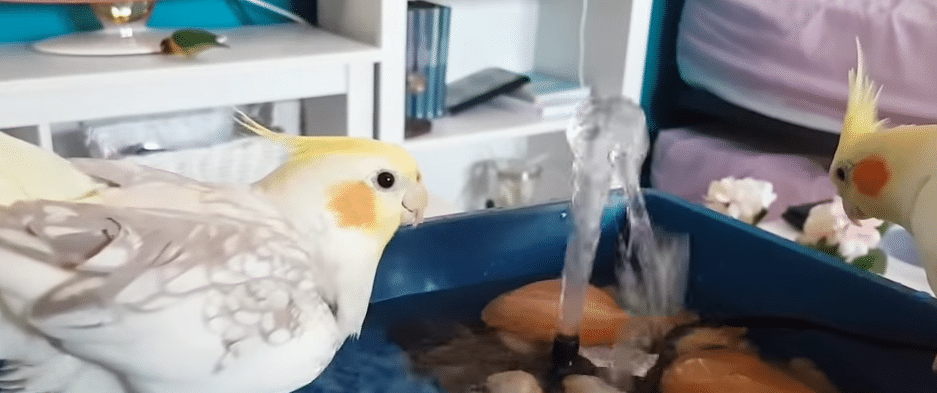 ninfas bañandose